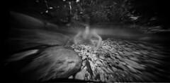 BATPAXOMAXIA (Vincenzo Caniparoli) Tags: homemadepinhole homemadeunderwaterpinholecamera homemade homemadepinholecamera analog argentique analogico bw blackandwithe efke efker50 mediumformat pinhole stenopeico stenopeica forostenopeico underwater 120 12x6cm