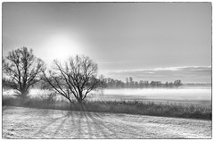 Winter is coming in Holland (marielledevalk) Tags: blackandwhite outdoor landscape sky horizon sun tree shadow holland netherlands dutch