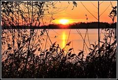 Coucher de soleil automnal (Les photos de LN) Tags: coucherdesoleil sunset automne nature paysage lumière couleurs ciel fleuve garonne aquitaine bordeaux sudouest berges rivages roseaux