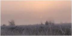 sunrise (HP019833) (Hetwie) Tags: natuur frost ijs heather nachtvorst ice zonsopkomst kou rijp nature sunrise ochtend strabrechtseheide strabrecht frozen vorst heide lierop noordbrabant nederland