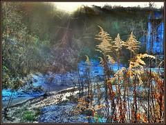 Sunlight (almresi1) Tags: sonnenstrahlen sun halme schilf bach river schnee snow raureif weinberge strümpfelbach weinstadt