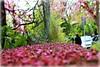 Spring at Kifisia Athens (philos from Athens) Tags: green purple judastree αθήνα άνοιξη κηφισιά κουτσουπιά picmonkey:app=editor