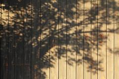 Virtual Vegetation (gripspix (OFF)) Tags: shadow plant pflanze schatten 20140505