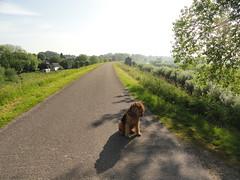 2014-0919 (schuttermajoor) Tags: nederland hond che waal 2014 airedaleterrier waardenburg tielerwaardwandelroute