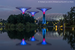 Blue Supertrees (P5211009) (Michael.Lee.Pics.NYC) Tags: blue lake flower reflection gardens night bay singapore long exposure dragonfly hour dome supertree