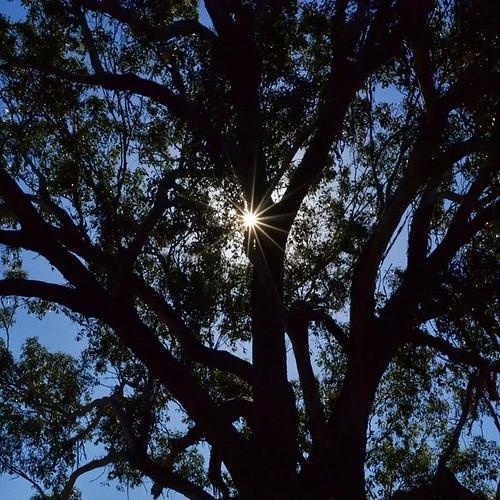 Starlight shining through.