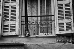 A dogs life... (martin.mutch) Tags: thelittledoglaughednoiretblancet notyourusualstilllife