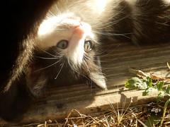 Cute Kittens (Quetzalcoatl002) Tags: camping cats cute kittens perpignan garrigole