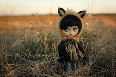 ♥ Little Fox