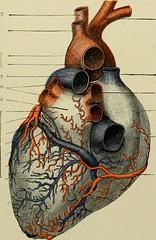 Anglų lietuvių žodynas. Žodis pulmonary circulation reiškia plaučių apyvartą lietuviškai.