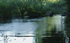 32- #53X -  Efecto Seda (Nuria M. Alonso) Tags: verde río agua arboles bosque piedras vegetación alcaládehenares reflejosenelagua riohenares refejos efectoseda
