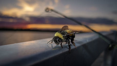 IMG_0374.jpg (Mathieux Boudreau Photography) Tags: sunset sun lake macro boat bee oro