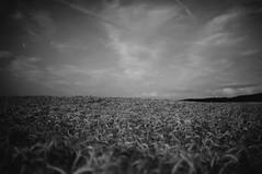 Wheat (picturesfrommars) Tags: bw wheat feld sw landschaft weizen sel35f18 nex5r