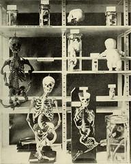 Anglų lietuvių žodynas. Žodis developmental anatomy reiškia vystymosi anatomija lietuviškai.