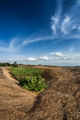 Lotus Pond at Savandurga (Jnarin) Tags: nature horizontal landscape outdoors bangalore fulllength nopeople karnataka savandurga lotuspond colorimage sigma15mmf28exdgdiagonalfisheye manchinbele aroundbangalore manchinbelle niranjvaidyanathan canoneos5dmarkiii