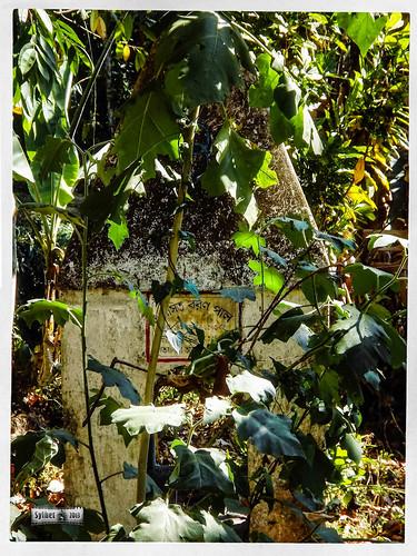 Madhabkunda Eco Park & Water Fall, Sylhet-3-2.jpg
