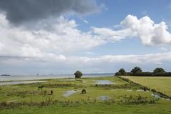 IJsselmeer / Netherlands (U-77) Tags: horses lake holland water netherlands rain fence boats landscapes mood sailing nederland paysbas ijsselmeer weiland niederlande landschaften paarden sfeer lakescapes landschappen canoneos1dsmarkii pferden chevals canon1635 vanzoelen