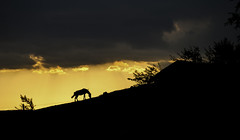 Raicho The Horsie (DobriMv) Tags: sunset horse mountain nature yellow clouds landscape outdoors europe village bulgaria balkans  contrajure
