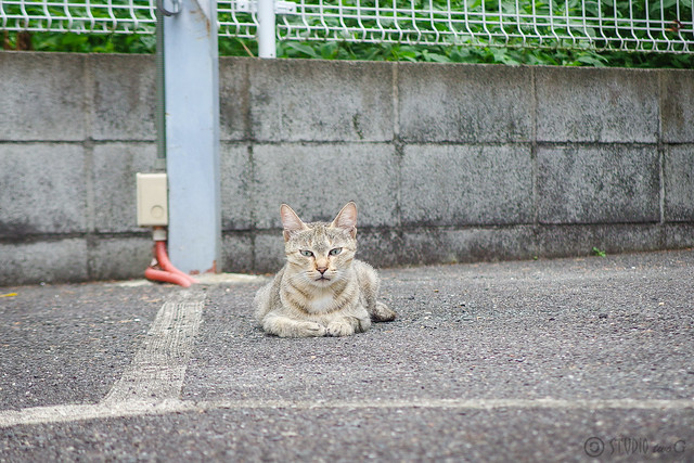 Today's Cat@2014-08-07