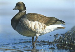 2014 Federal Duck Stamp Art Contest Entry 42 (USFWS Headquarters) Tags: art duck conservation stamp wetlands waterfowl