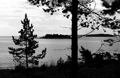 Sweden 2014 (SS) Tags: light sea summer vacation sky tree monochrome grass clouds contrast landscape island photography coast view pentax sweden branches perspective silhouettes balticsea treetrunk tones k5 2014 ss