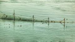 Filet de pche (sgauthier) Tags: fishnet filet saintlaurent charlevoix fleuve pche navetteferroviaire