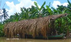 N22 Mekong Delta, Delta du Mekong, Vietnam, My Tho, Can Tho, Vinh Long, Long Xuyen, Sa Dec, Soc Trang, Cao Lanh, Chau Doc, Ca Mau, Cai Rang, Phmg Hiep, Phong Dien, Cai Be, March Flottant, Floating Market, Vietnamiens Vietnamiennes, Vietnamese People (tamycoladelyves) Tags: trip ladies woman man cute men lady wonderful amazing nice fantastic women vietnamese tour awesome great delta super vietnam stunning excellent extraordinaire guide traveling mekongdelta paysage mekong beau magnifique floatingmarket hommes insolite femmes beautifull delightful nationalgeographic cantho fleuve mytho routard curiosit carnetdevoyage trange mekongriver superbe chaudoc oustanding longxuyen cairang ravissant vietnamien sadec vietnamienne vinhlong caibe soctrang vietnamesepeople caolanh surprenant officedutourisme marchflottant camau touroperator deltadumekong phongdien journeydiary croisiremekong mekongcruse phmghiep lonelyplanete