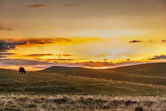Grazing Sunset (http://fineartamerica.com/profiles/robert-bales.ht) Tags: red mountains beautiful silhouette yellow rural wow spectacular landscape countryside photo twilight cattle superb awesome fineart farming scenic surreal peaceful panoramic idaho pasture sensational prairie agriculture inspirational spiritual sublime refreshing magical range tranquil emmett magnificent grazing inspiring sagebrush haybales facebook stupendous farmfield layered sunglow sunsetphotography canonshooter outdooridaho sceniclandscapephotography robertbales