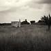 Paesaggio Rurale 4