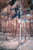 Trees (Photo Lab by Ross Farnham) Tags: trees ir nikon derbyshire infrared 1635mm
