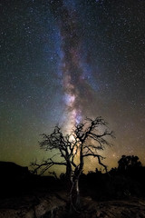 Galactic Tree (Eddie 11uisma) Tags: arizona southwest landscapes desert grand canyon eddie toroweap lluisma