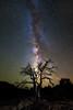 Galactic Tree (Eddie 11uisma) Tags: arizona southwest landscapes desert grand canyon eddie toroweap lluisma