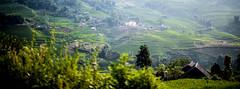 Sapa, Vietnam (tom.frohnhofer) Tags: mountain field rice terrace hills vietnam sapa