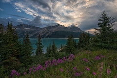 Clouds of Fury (RkyMtnGrl) Tags: trees sunset lake canada mountains nature clouds landscape evening nikon alberta fireweed banffnationalpark icefieldsparkway bowlake canadianrockies 2014 coth supershot damniwishidtakenthat coth5 dailynaturetnc14