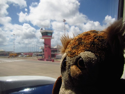 merlin says farewell to bonaire