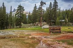 Tuolumne Meadows (Samantha Decker) Tags: ca california canonef50mmf14usm canoneos6d nps nationalparkservice samanthadecker tuolumnemeadows yosemitenationalpark