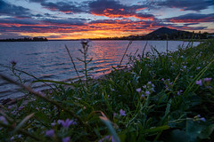 River Road Reserve (Andy Hutchinson) Tags: australia shoalhavenheads riverroadreserve sunset shoalhaven nsw newsouthwales au