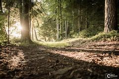 Bavarian Sunset (CHRiiZ) Tags: sunset bavarian bayern sonnenuntergang nikon d5300 natur nature sun sommer herbst autom summer forest wald weg way path pfad chriiz chriizcom