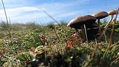 Mushroom Cloud (monkeyiron) Tags: stucanlochain munro hillwalking glenlyon perthshire mushroom fungus