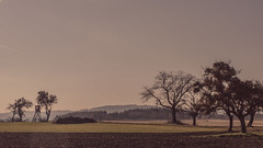 On the Plateau (Netsrak) Tags: spay rheinlandpfalz deutschland de tree trees baum bume ebene plateau rural lndlich natur nature landschaft landscape haze hazy dunst dunstig
