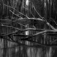 Quient Corners 002 (noahbw) Tags: d5000 dof nikon ryersonwoodsforestpreserve abstract blackwhite blackandwhite branches bw depthoffield forest landscape monochrome natural noahbw quiet reflection shadow square still stillness trees water winter woods