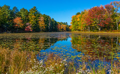 Fall Colors On Lake Superior *Explore* (Catskills Photography) Tags: lake water reflections landscape autumn fall rural park canong15