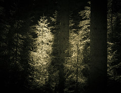 There is Light (gerainte1) Tags: saxonyswitzerland germany trees forest woodland blackandwhite