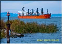 Global Wisdom 1593 LR (bradleybennett) Tags: cargo vessel ship shipping delta water river ocean tanker antioch port stockton global wisdom