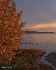 Un matin aux couleurs d'octobre... / A morning in october's colours... (Pentax_clic) Tags: canon g12 img1610 octobre 2016 robert warren anse vaudreuil quebec arbre lac