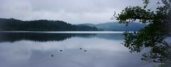 Loch Ard reflections (Scotland) (armxesde) Tags: pentax ricoh k3 grosbritannien uk schottland scotland lochard loch see water wasser reflection spiegelung tree baum duck ente