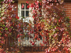 Enjoy the little things (Lancashire Lass ...... :) :) :)) Tags: autumn door leaves balcony fence railings quote wall