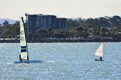 DSC_0381 (LoxPix2) Tags: loxpix queensland australia sailing catamaran trimaran nacra hobie arrow moth 505 maricat humpybongyachtclub humpybash aclass f18 mosquito laser bird spinnaker woodypoint