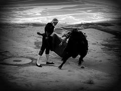 Luis Francisco Espl (aficion2012) Tags: arles goyesca goyesque corrida septembre 2016 france francia luis francisco espla matador torero zalzuendo toros toro bullfight bull
