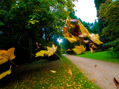 Autum Leaves (RS400) Tags: autumn leaves westonbirt arboreturn arboretum west south cool wow amazing wild natural grass green olympus trees tree path